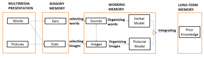 Cognitive processing in a multimedia environment